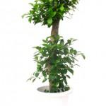 やってはいけない観葉植物の置き方にご用心