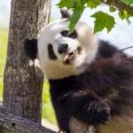 パンダで金運と恋愛運がアップする