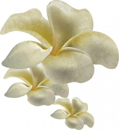 flower1109